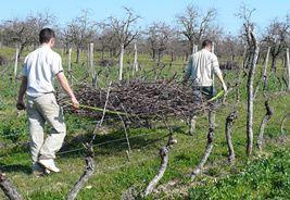 civiere-a-bois-de-vigne
