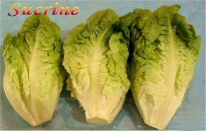 Salade-Sucrine.jpg