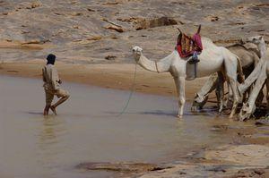 Camel-in-the-eau.jpg