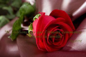 Haute-Qualite-belles-roses-rouges-Large-485x728.jpg