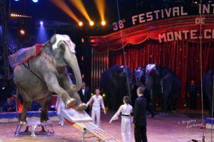 Monaco-Festival-du-cirque-160114-BL-235.JPG