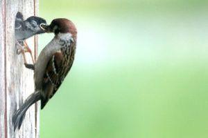 37b - Mehr Vögelchen 3766