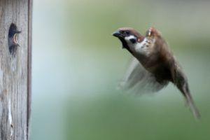 37b - Mehr Vögelchen 3956
