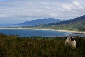 Irland 9772
