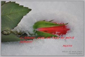 rose-neigne-copie-1.jpg