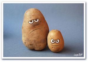 patates-photo.jpg