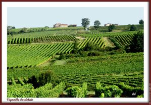 vignoble-bordelais.jpg