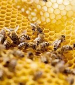 des-apiculteurs-se-mobilisent-pour-l-interdiction-du-mais-o.jpg