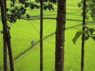 Viet riz 5