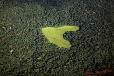 Prairie au coeur de la forêt gabonaise