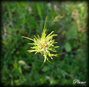 coeurdeplante.jpg