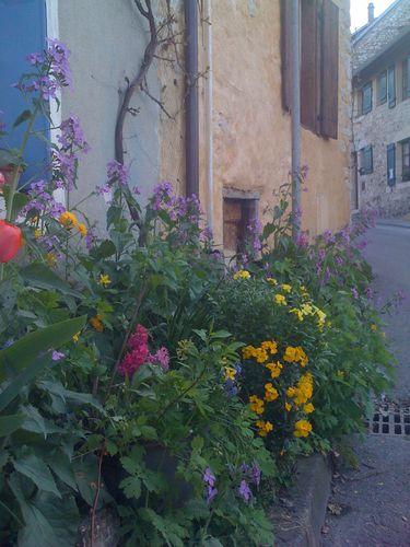 jardin 0337
