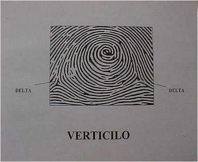 verticilos.jpg