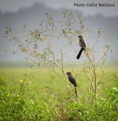 2-oiseaux-noirs.jpg