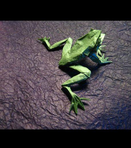une-grenouille_40453_w460.jpg
