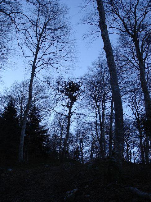 Vers le Pic du Gar : le col des Ares (797 m) 6