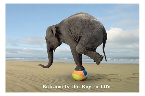 elephant-balance-chiropractic.jpg