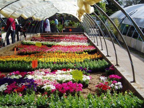 marche-aux-fleurs.jpg