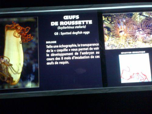 Le-Croisic-20130510-01356.jpg