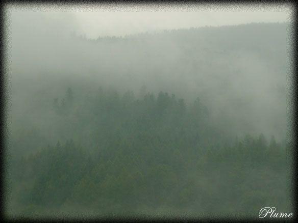 brouillardvert.jpg