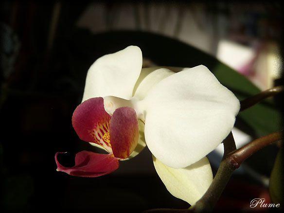 orchideeprofil.jpg
