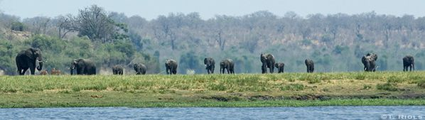 troupe_d_elephants-copie-1.jpg
