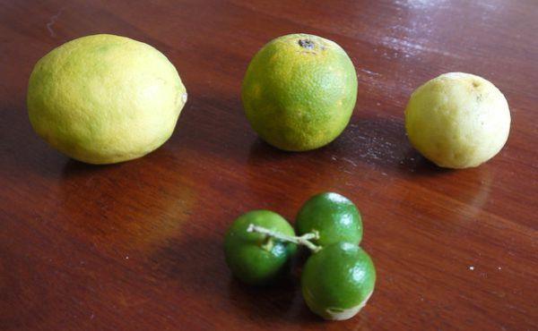 citrons.jpg