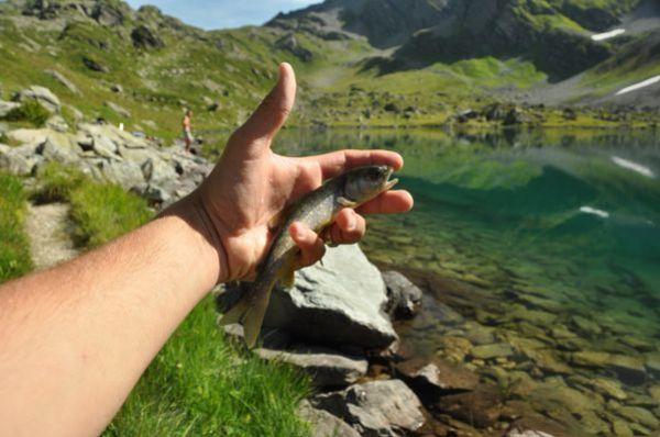 Alpes-2012 0799