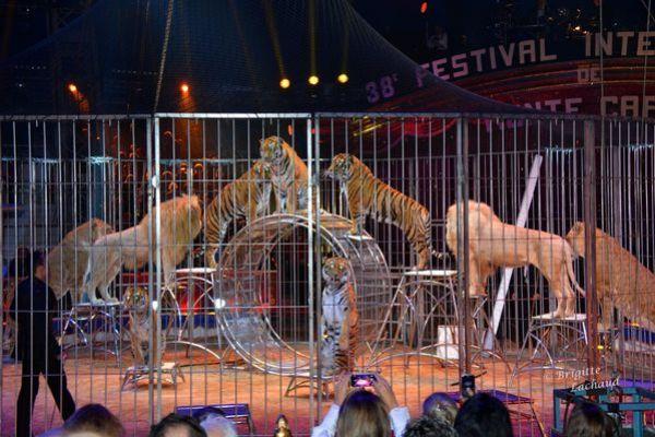 Monaco Festival du cirque 160114 BL 152