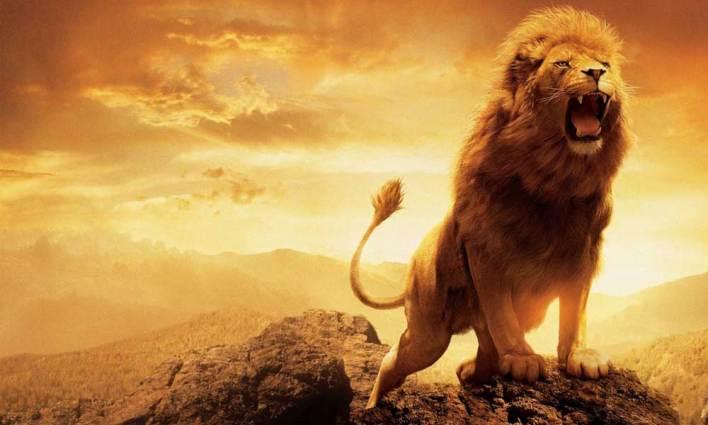 Sınır Tanımayan Aslanlar!