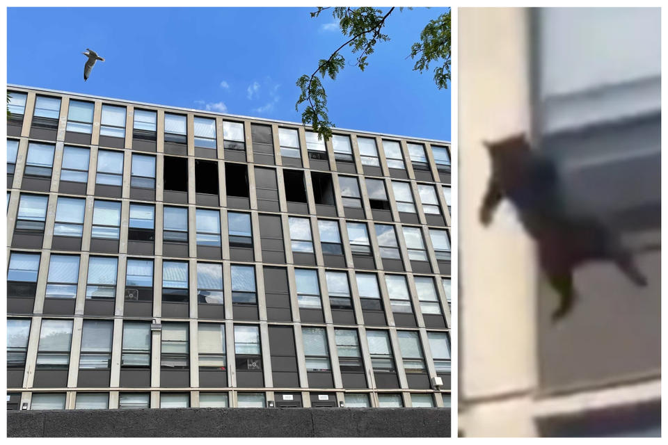 WATCH: Chicago cat survives daring jump off five-storey building to escape fire