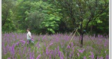台南柳營 南元花園休閒農場 被夢幻花海環繞~阿一一台南高雄小吃之旅
