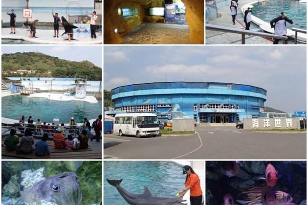 新北萬里 野柳海洋世界 海豚海獅跳水秀~重溫兒時美好回憶