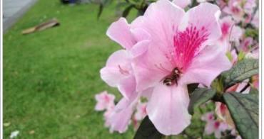 台北公館 台灣大學杜鵑花節~百花盛開,花團錦簇的校園