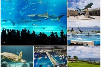 沖繩親子景點推薦 美麗海水族館/海洋博紀念公園 海豚秀/海龜館 交通/優惠門票~必看黑潮之海,看鯨鯊游泳超療癒