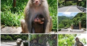 台東東河景點 泰源幽谷 登仙橋遊憩區~跟台灣獼猴近距離接觸