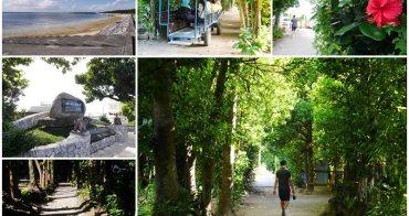 沖繩景點 備瀨福木林道~沖繩水族館旁秘境,300年古老青綠隧道