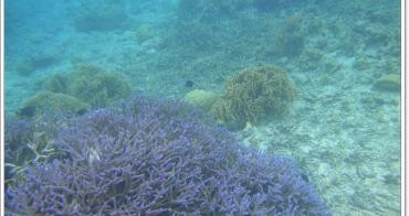 帛琉 藍色珊瑚區&山中湖保護區~阿一一帛琉藍色海洋之旅