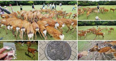 奈良活動 鹿寄せ 奈良號角喚鹿聚集大會~百隻鹿兒奔向你的超療癒體驗