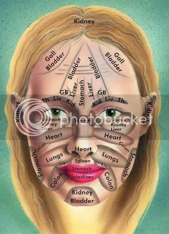 Afbeeldingsresultaat voor zones van de huid met organen