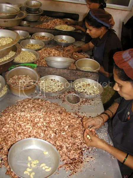 pics of women working in a cashew nut factory in Kumta Karnataka by Arun Shanbhag
