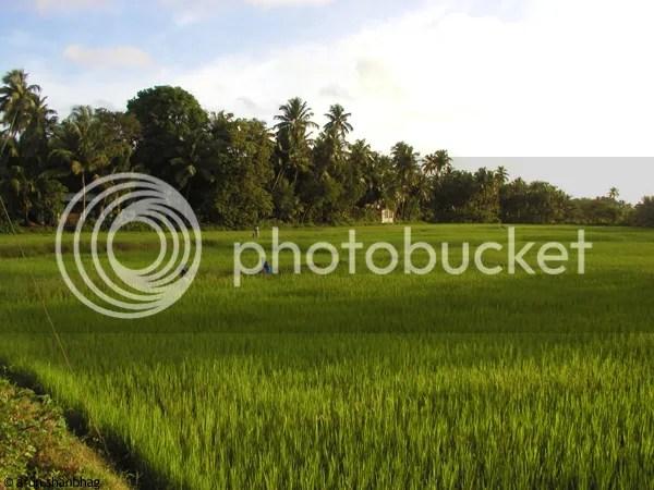 pics from Kumta by Arun Shanbhag