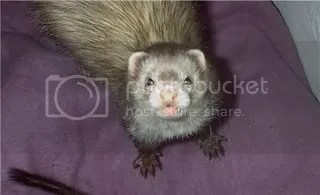 Look! A weasel!