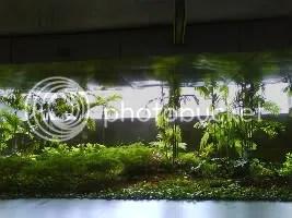 Rain on the Greens