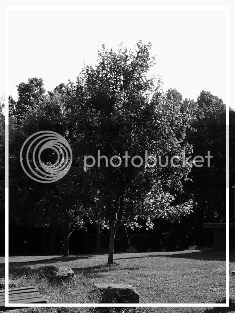photo 0f9eeb6f-7ba5-4586-a7a0-3ca5b2bb5afd.jpg