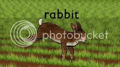 rabbit front