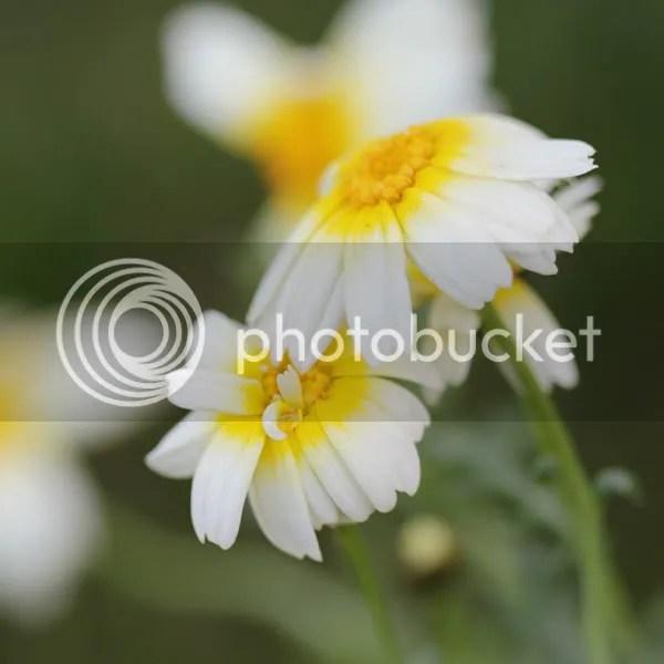 Unknown bloom