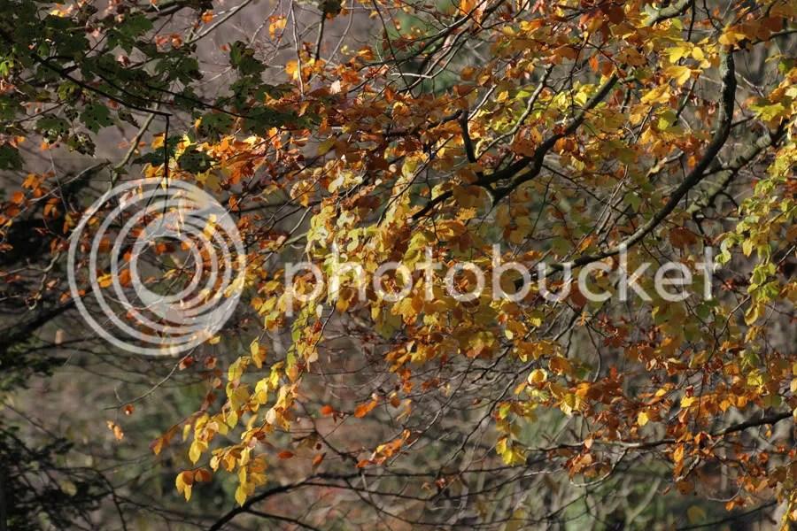 Pretty autumn colours