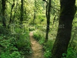 https://i1.wp.com/img.photobucket.com/albums/v20/Blackcat666x/IMVU/River%20Marked/wooded-path-518204-m_zps047e980d.jpg