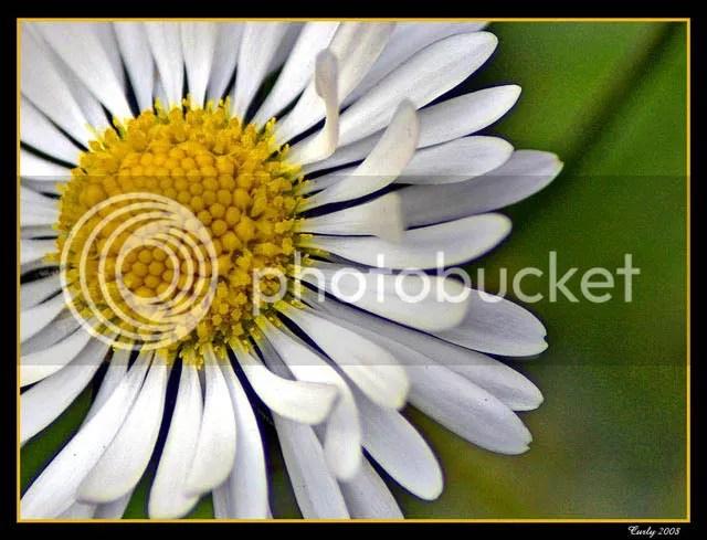daisy, South Shields